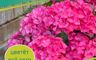 Измельчитель садовый цветок