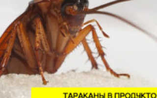 Для домашних насекомых в магазине ничего нет