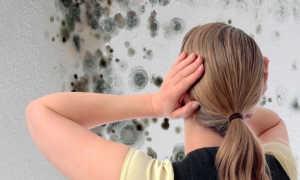 Белая плесень на стенах в квартире