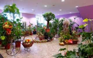 Дизайн цветочного магазина в стиле прованс
